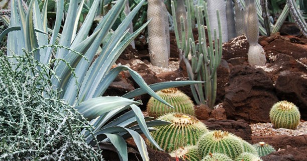 This Saturday: Cactus Garden Clean-up